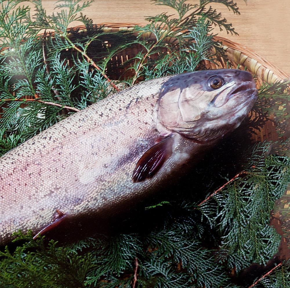 img_p_alps-salmon